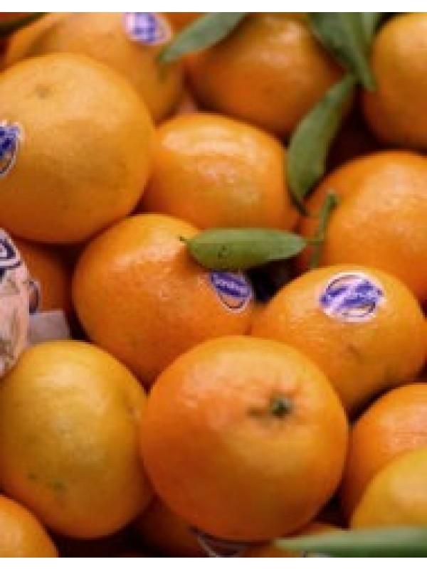 Mandarina € / kg